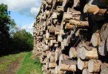 Forestry Industry. Image source: Public domain.